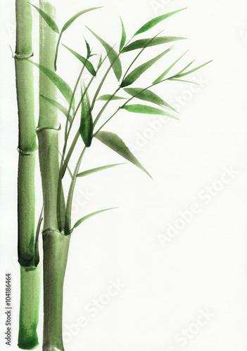 bambusowy-oryginalny-obraz-akwarelowy-na-bialym-tle