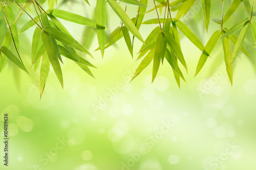 Foto op Plexiglas Bamboe Bamboo leaf and light soft green background