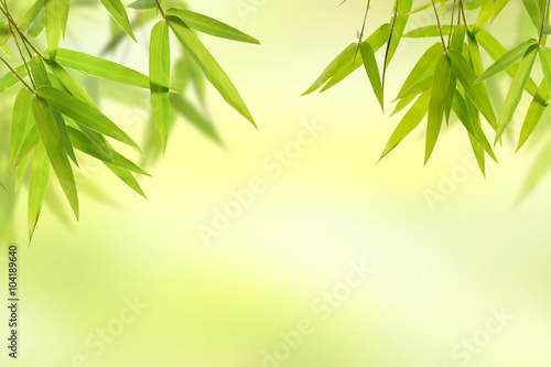 In de dag Bamboo Bamboo leaf and light soft green background