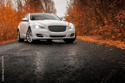 Fototapeta Whtie luxury car stay on wet asphalt road at autumn obraz