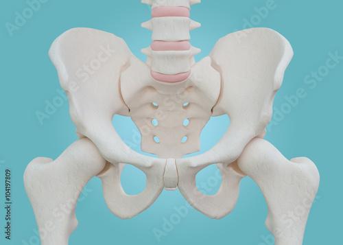 Fotografía  Hip Skeleton on blue background.