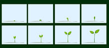 Animation Of Seed Germination ...