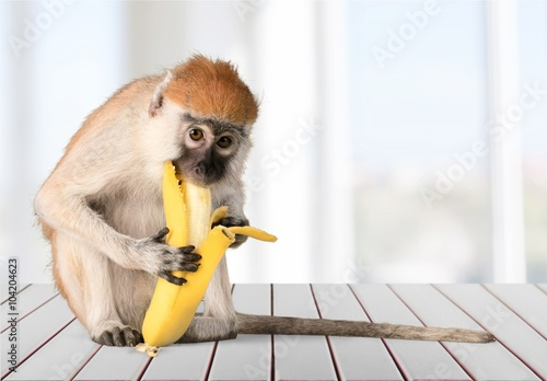 Photo sur Toile Singe Monkey.