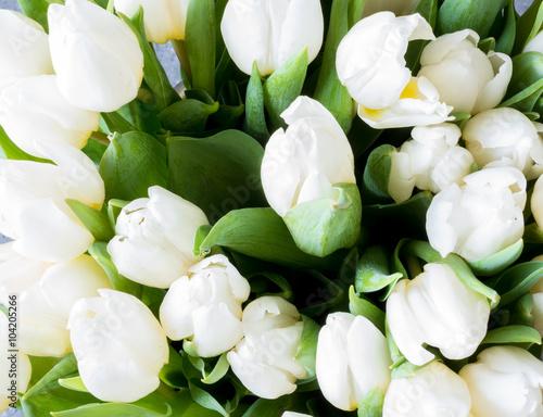 Wall Murals Tulip White tulips background