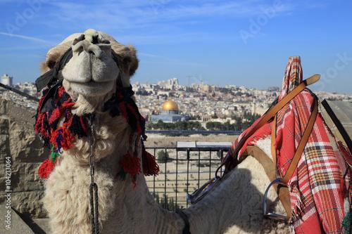 Cuadros en Lienzo Mount of Olives, Jerusalem