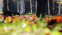 Dog Walking On The Autumn Leaves