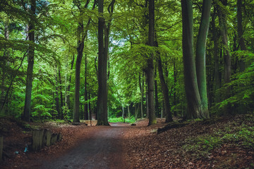 way at forest