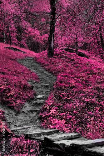 Poster Crimson ir forest vertical landscape