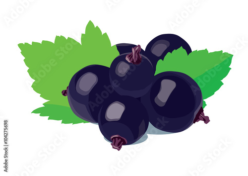Fotografia  Black currants with leaves