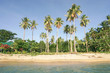 """Beach palms from the sea at """" Las Cabanas """" seaside in El Nido Palawan - Philippines islands exclusive destinations"""