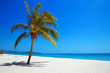 Palm tree on tropical beach. Nature View. Travel.