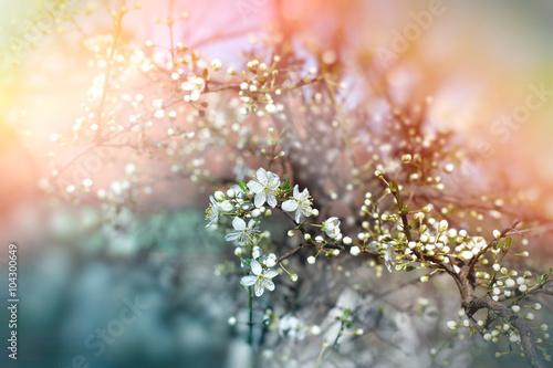 wiosenne-paki-i-kwiatki-na-galezi-drzewa