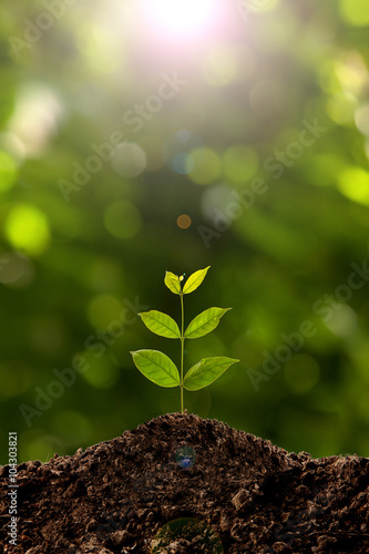 Staande foto Planten Green sprout growing