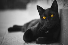 Black Gat : Gatto Nero Su Strada  Bianco Nero E Colorazione Occhi