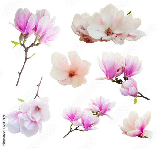 Stickers pour portes Magnolia Blossoming pink magnolia Flowers
