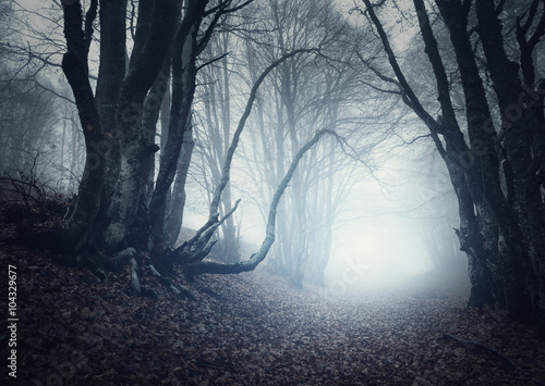 Aluminium Prints Dark grey Scary mysterious forest in fog in autumn. Magic trees