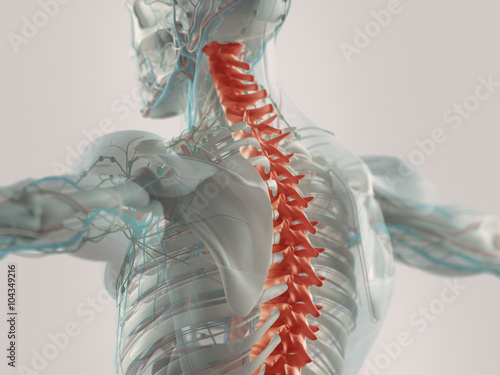 Fotografia  Human anatomy spine pain highlighted in red. X-ray view.