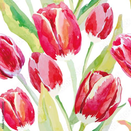czerwone-tulipany-na-bialym-tle