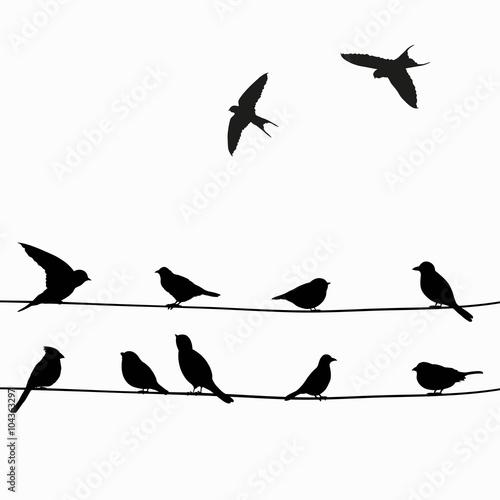 czarne-ptaki-siedzace-na-liniach