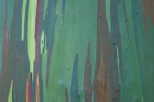 Eucalyptus Bark Close-up