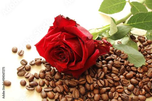 czerwona-roza-na-ziarna-kawy