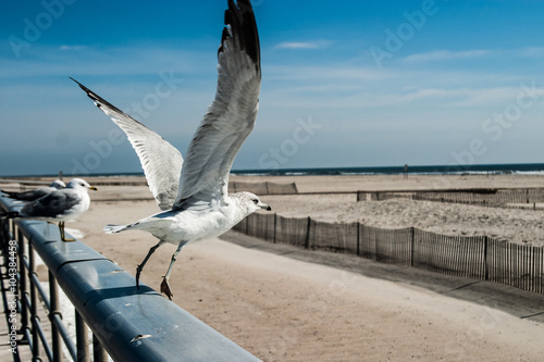 Fotografia A seagull takes flight