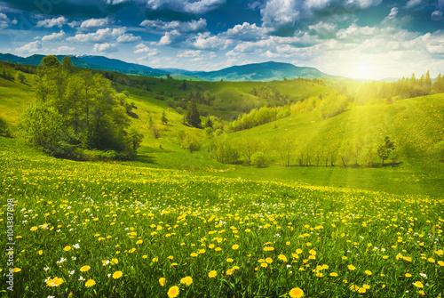 zolte-kwiaty-na-gorskiej-lace-wiosna