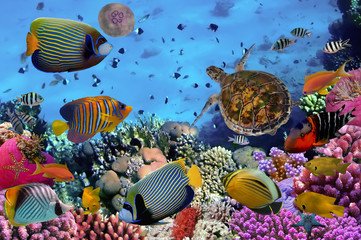 Fototapeta Rafa koralowa colorful coral reef with many fishes