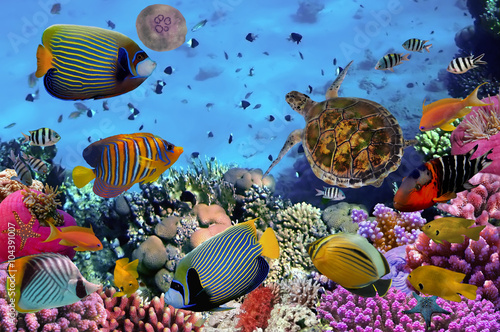 Fototapety, obrazy: colorful coral reef with many fishes