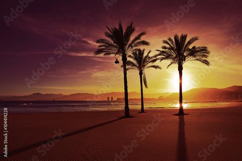 Garden Poster Brown Cullera Playa los Olivos beach sunset in Valencia