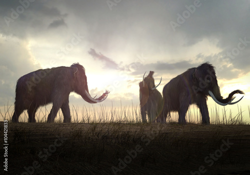 Obraz na plátně  Woolly Mammoths In The Sunset