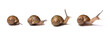Set of snails isolated on white background