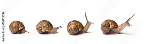 Set of snails isolated on white background Canvas Print