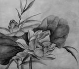 kwiat lotosu - 104426287