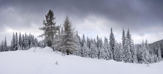 Frozen winter forest in the fog. Carpathian, Ukraine