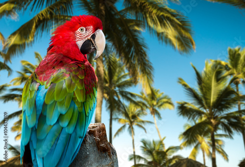 Tuinposter Papegaai Red Macaw on the nature