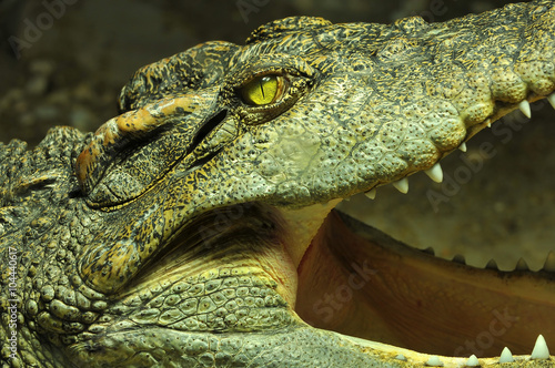 Crocodile with open mouth Canvas Print