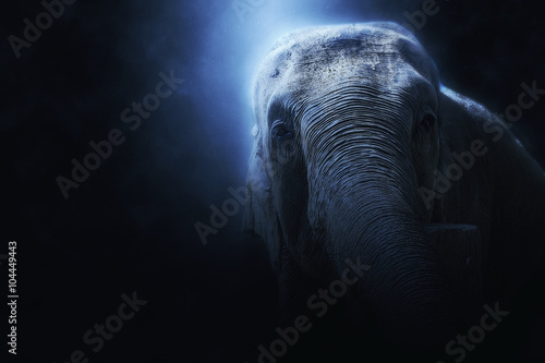 Photo  photo manipulation of a wild elephant in Sri Lanka