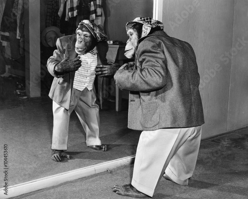 Chimpanzee in a jacket and trousers in front of a mirror Canvas Print