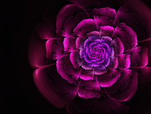 Bright Abstract Fractal Flowers