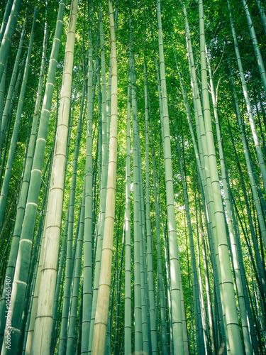 Papiers peints Bambou Bamboo path
