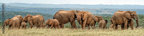 Elephant Herd Wallpaper Mural