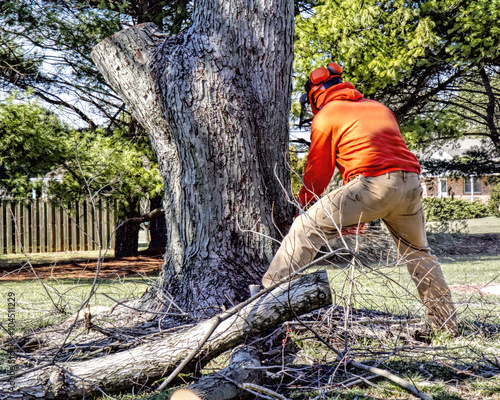 how to cut large tree limbs
