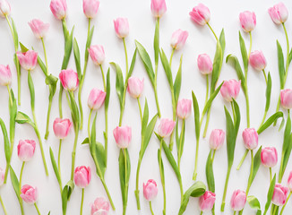fresh spring pink tulips on white background
