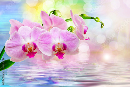 Fototapety, obrazy: Orchid flower close up