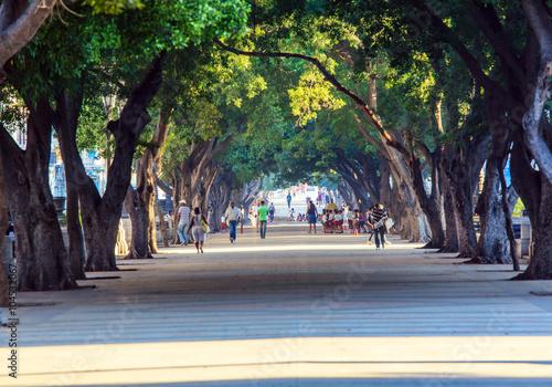 mata magnetyczna Central Park of Havana