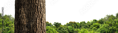 Summer landscape of young green forest isolated on white background.