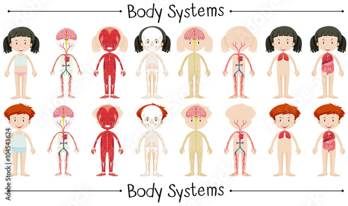 Fotografie, Obraz  Body system of boy and girl