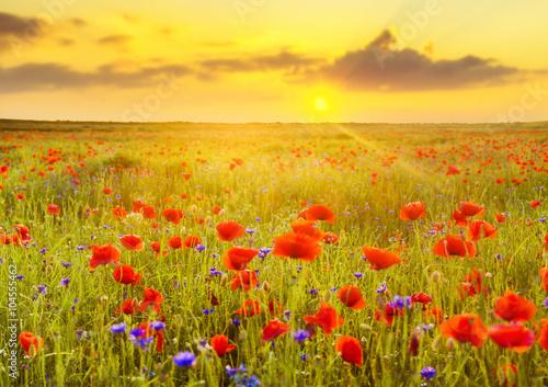 Fototapeta Maki polne-zachód słońca obraz