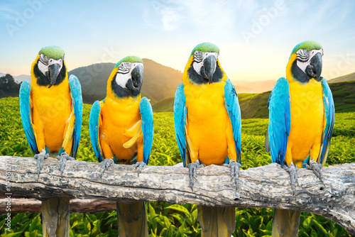 Foto op Canvas Papegaai Blue and Gold Macaw on branch in tropical forest
